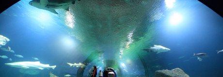 Túnel Oceanogràfic