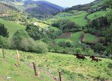 Caballos en el valle de Taramundi