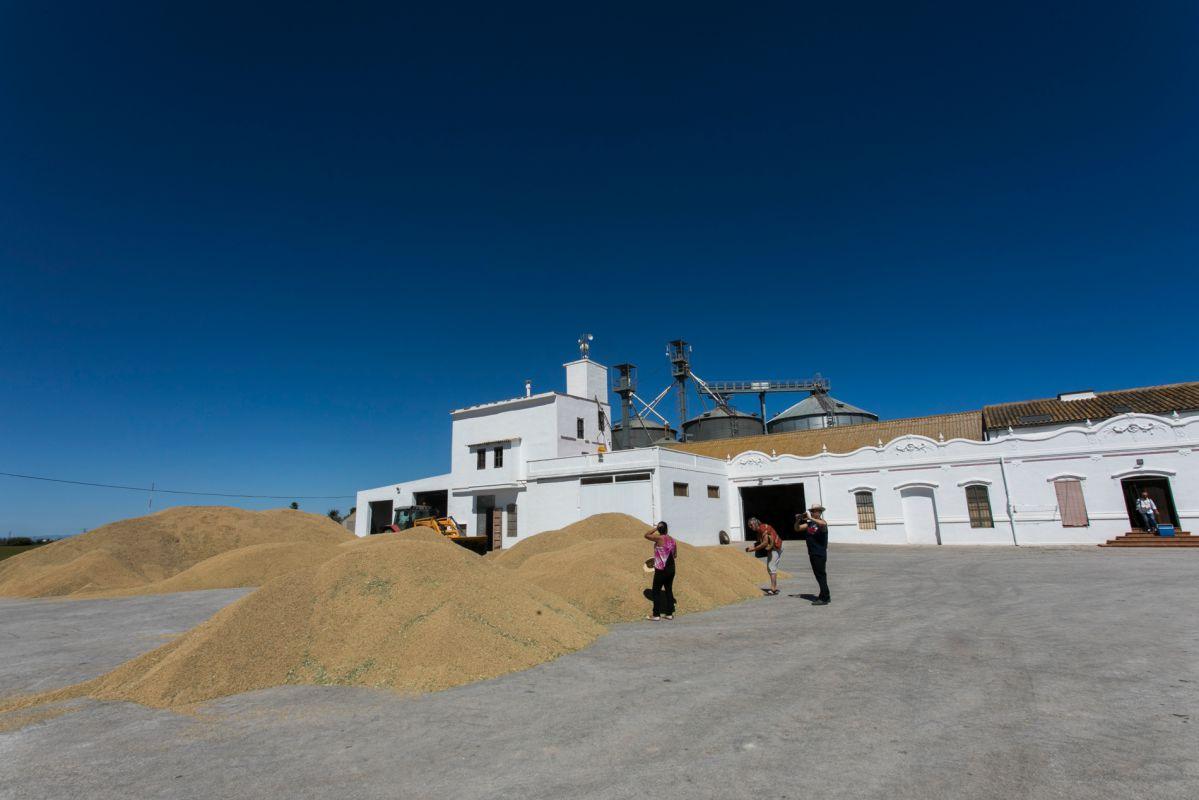 Los secaderos de arroz en la Finca Estell. Foto: Eva Máñez
