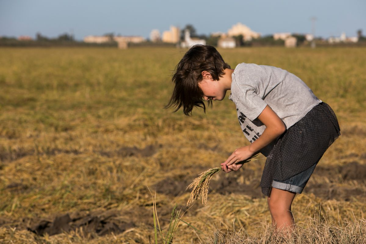 Una visitante de la Finca Estell coge la planta de arroz con sus manos. Foto: Eva Máñez