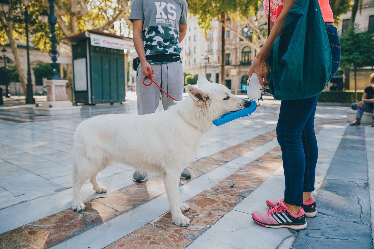 Perros y humanos de Obediencia Urbana, entretenidos. Foto: Javier Sierra