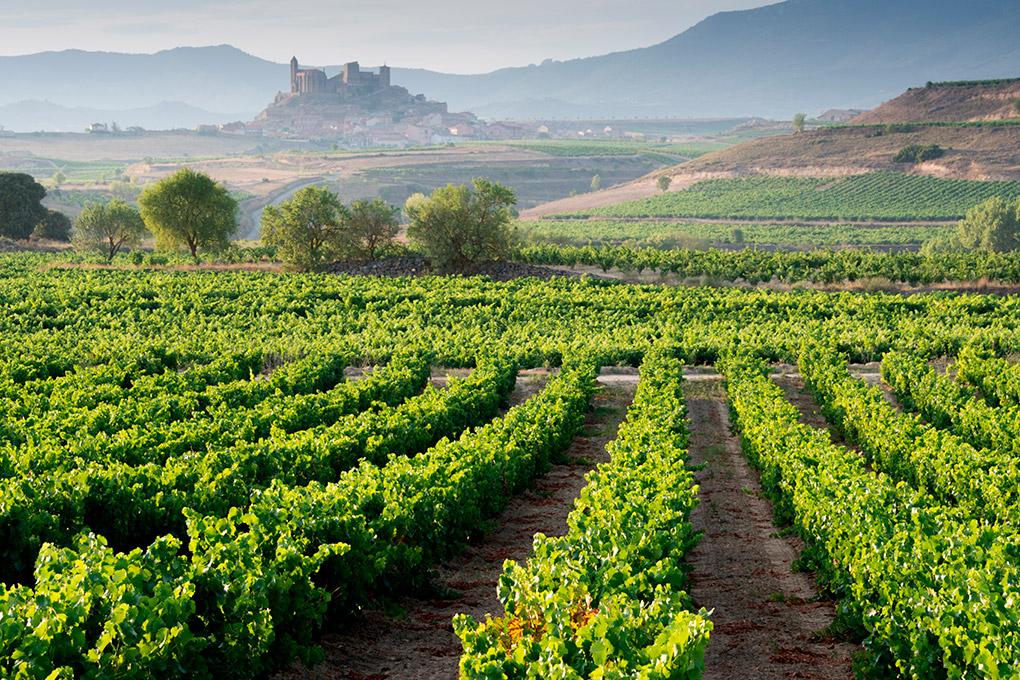 Paisaje con viñedos de la Rioja