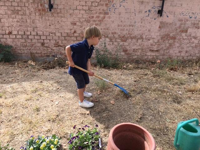 Rastrillar el suelo en el huerto urbano de Chamartín
