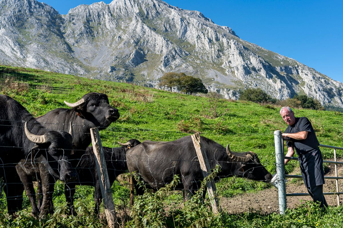 Bittor junto a sus búfalas. Foto: Alfredo Cáliz