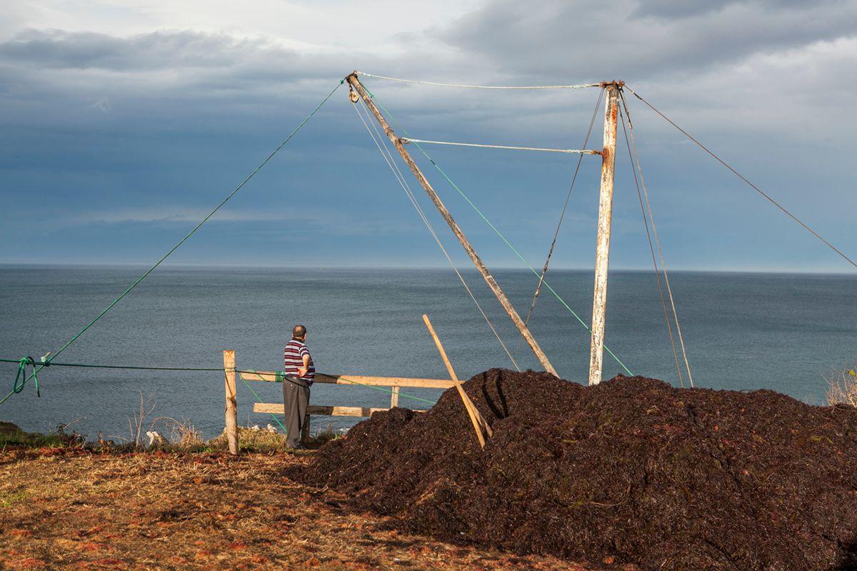 Las algas se extraen con un puntal. Foto: José García