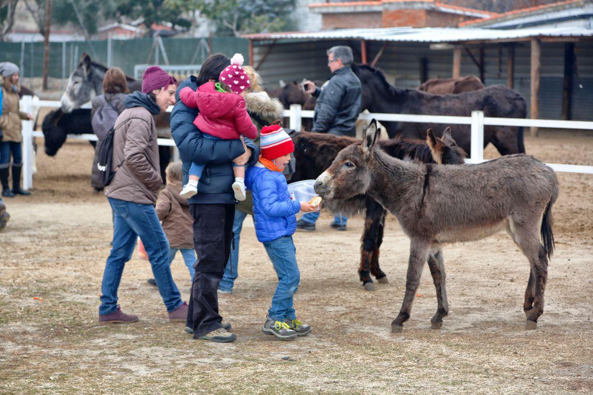 Los niños dando de comer a los burros. Foto: Roberto Ranero