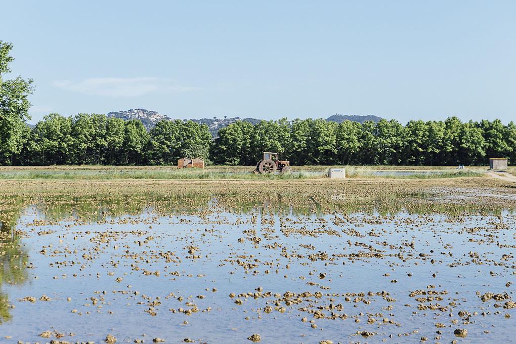 Pals (Bajo Ampurdán, Baix Empordà) - arrozales (2) - Foto: César Cid