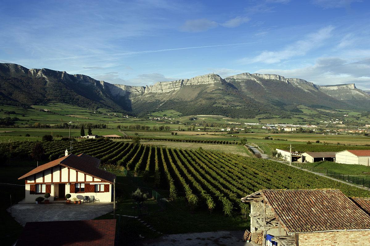 Paisaje de viñedos y montañas de Artomaña Txakolina. Foto: Arabako Txakolina