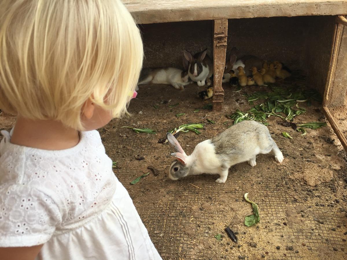 Alimentando a los conejos de la granja. Foto: Beatriz Vigil