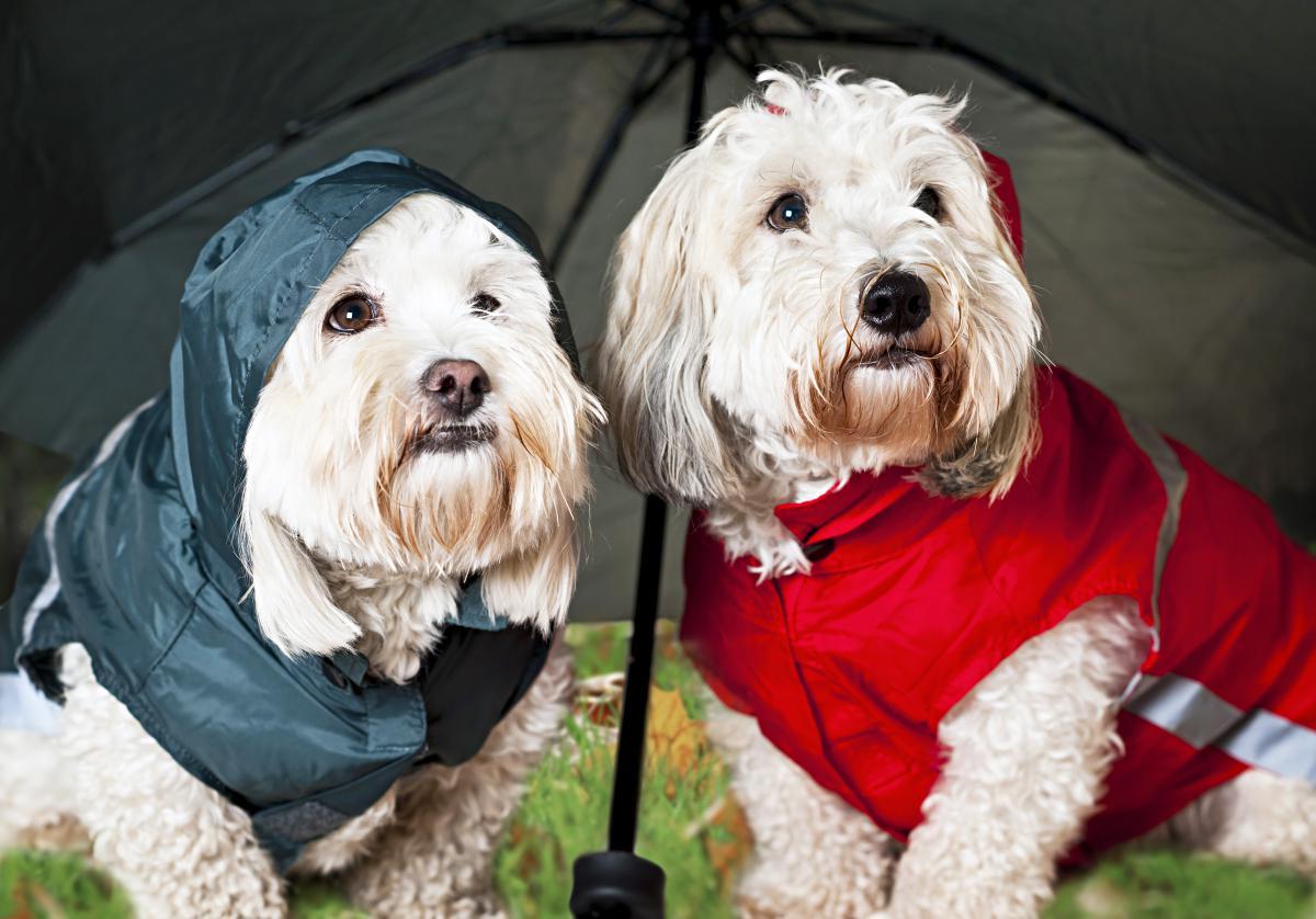 perros con chubasquero