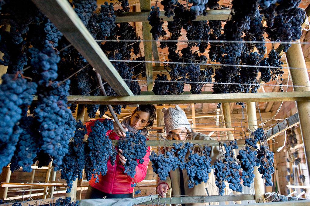 Vinos de La Rioja.