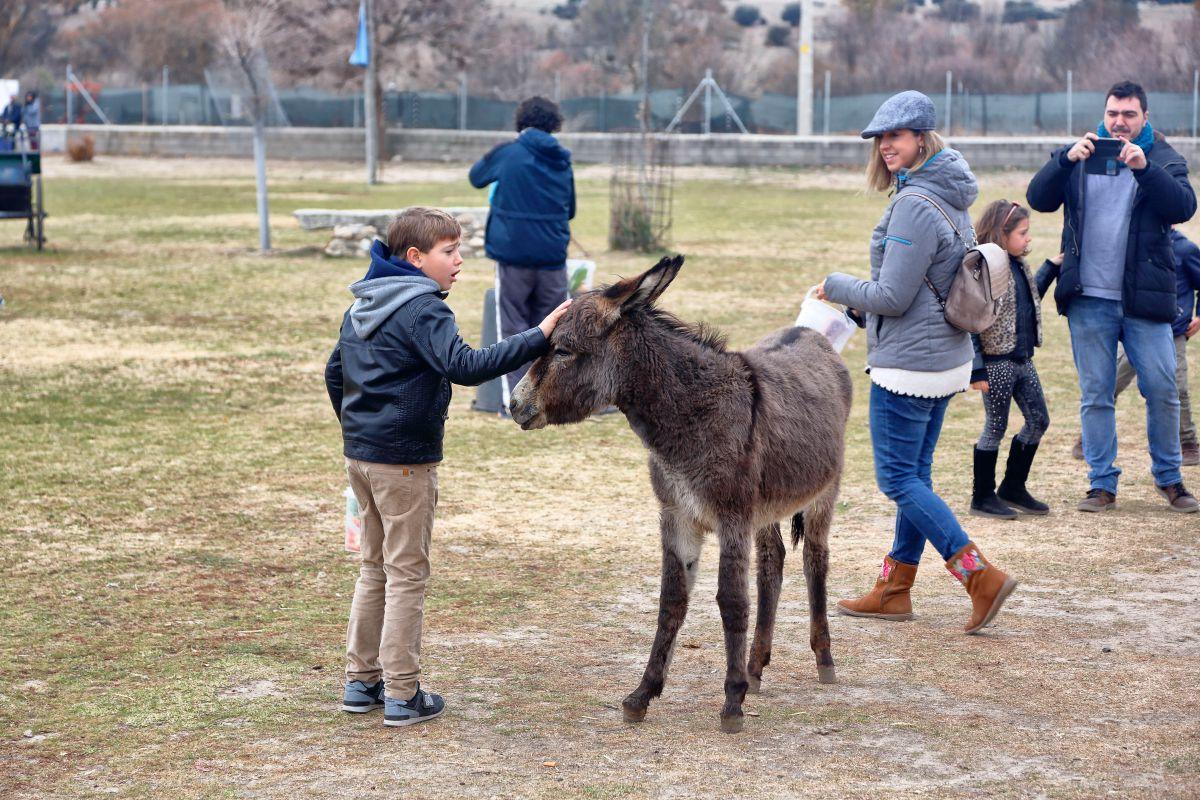 Son animales muy dulces. Foto: Roberto Ranero