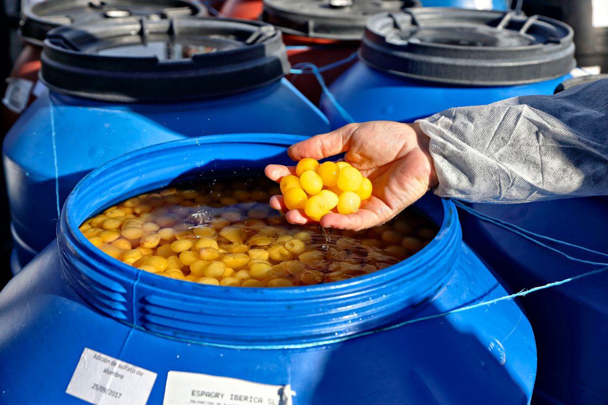 Frutas confitadas 'Francisco Moreno' (Calahorra). Fruta en líquido de gobierno. Foto: Roberto Ranero