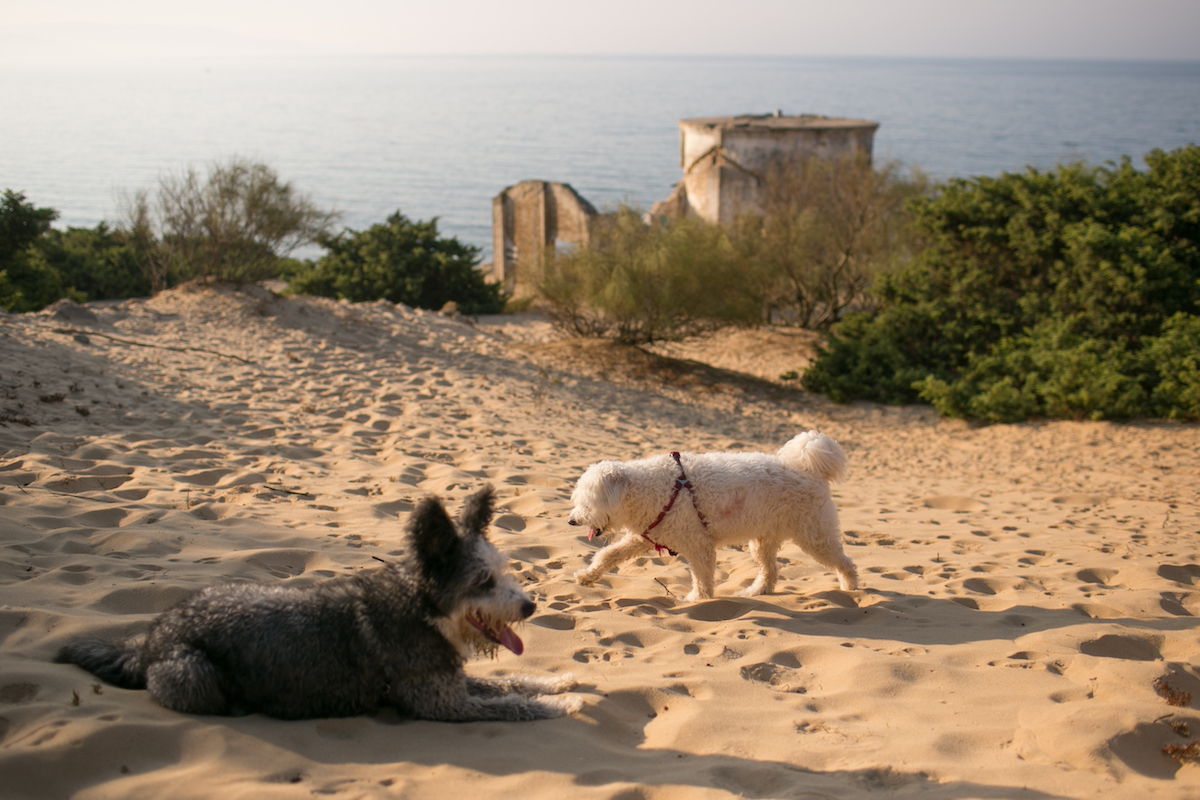 Perros en la arena