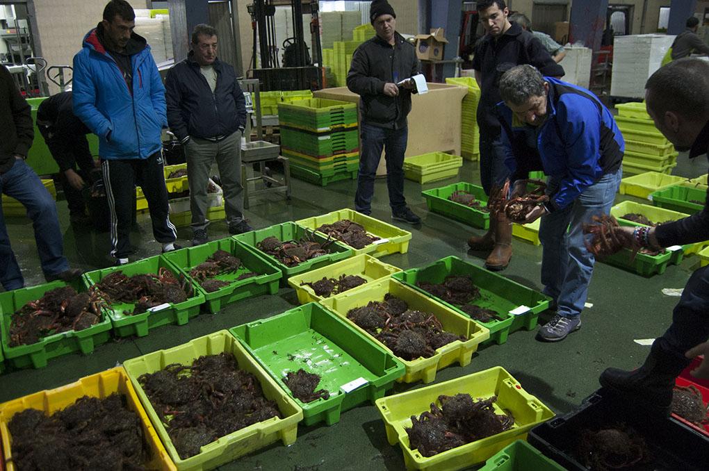Lonja de Ribeira (A Coruña). José Manuel Rabina en la subasta de centollas. Foto: Clara Vilar