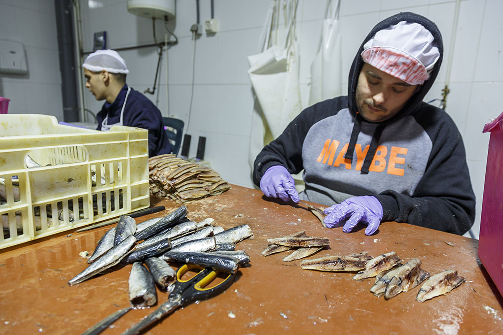 Salazones Alma Marina - limpieza de sardinas. Foto: Pepe Olivares