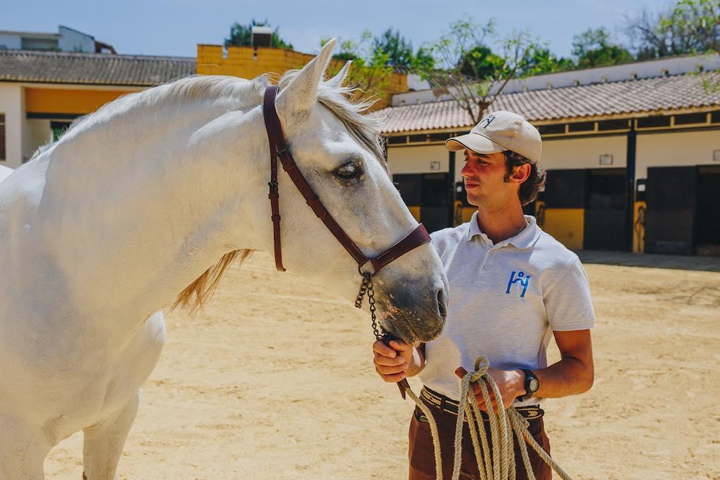 Perfil de un caballo cartujo en la Yeguada de la CArtuja. Foto: Javier Sierra