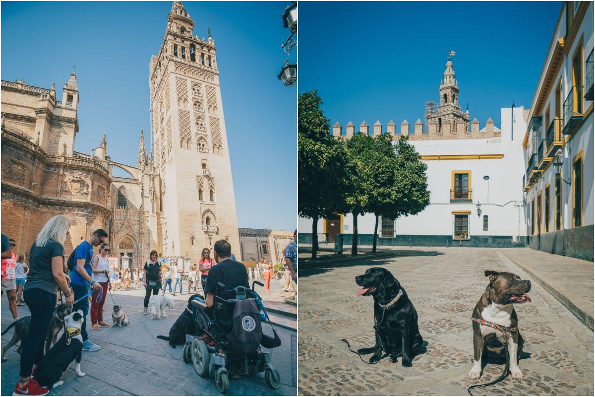 El grupo Obediencia Urbana junto a la Giralda y dos de los perros participantes en el Patio Banderas. Fotos: Javier Sierra
