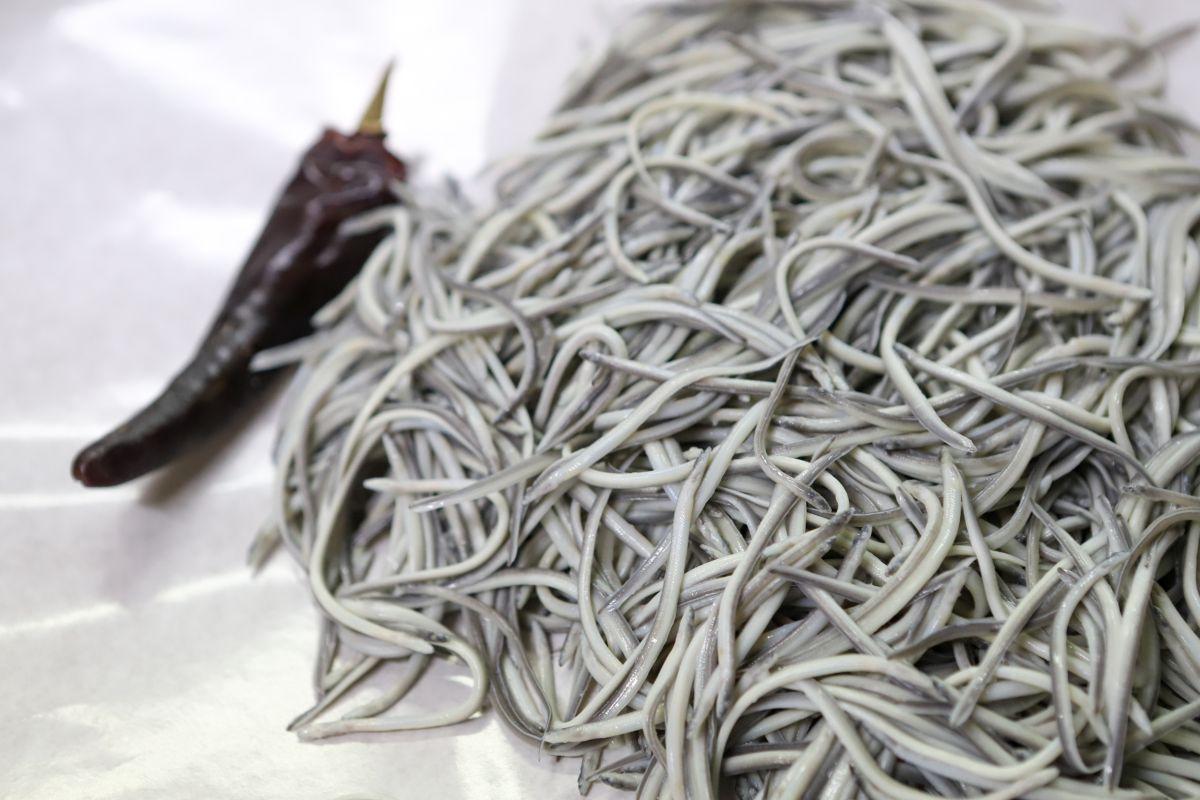 Angulas cocidas con su guindilla, a la bilbaína. Foto: Bixigorri