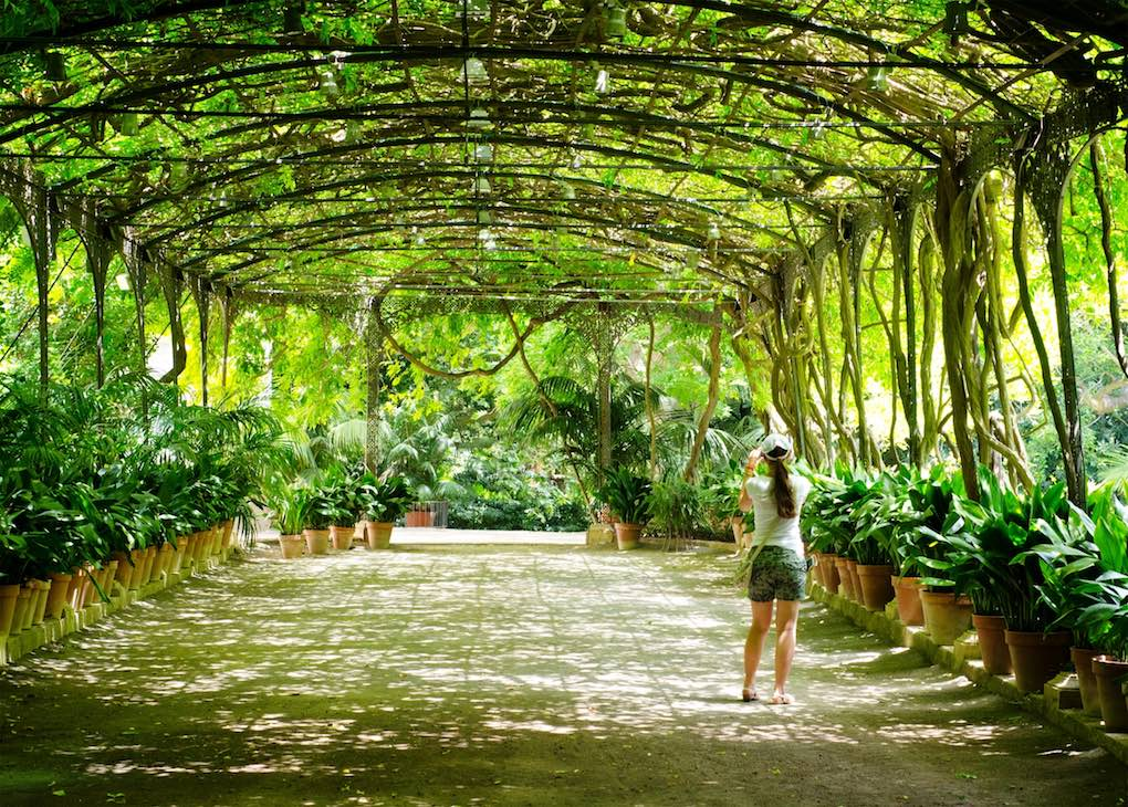 La Concepción Jardín Botánico Histórico, de Málaga. Foto: Shutterstock