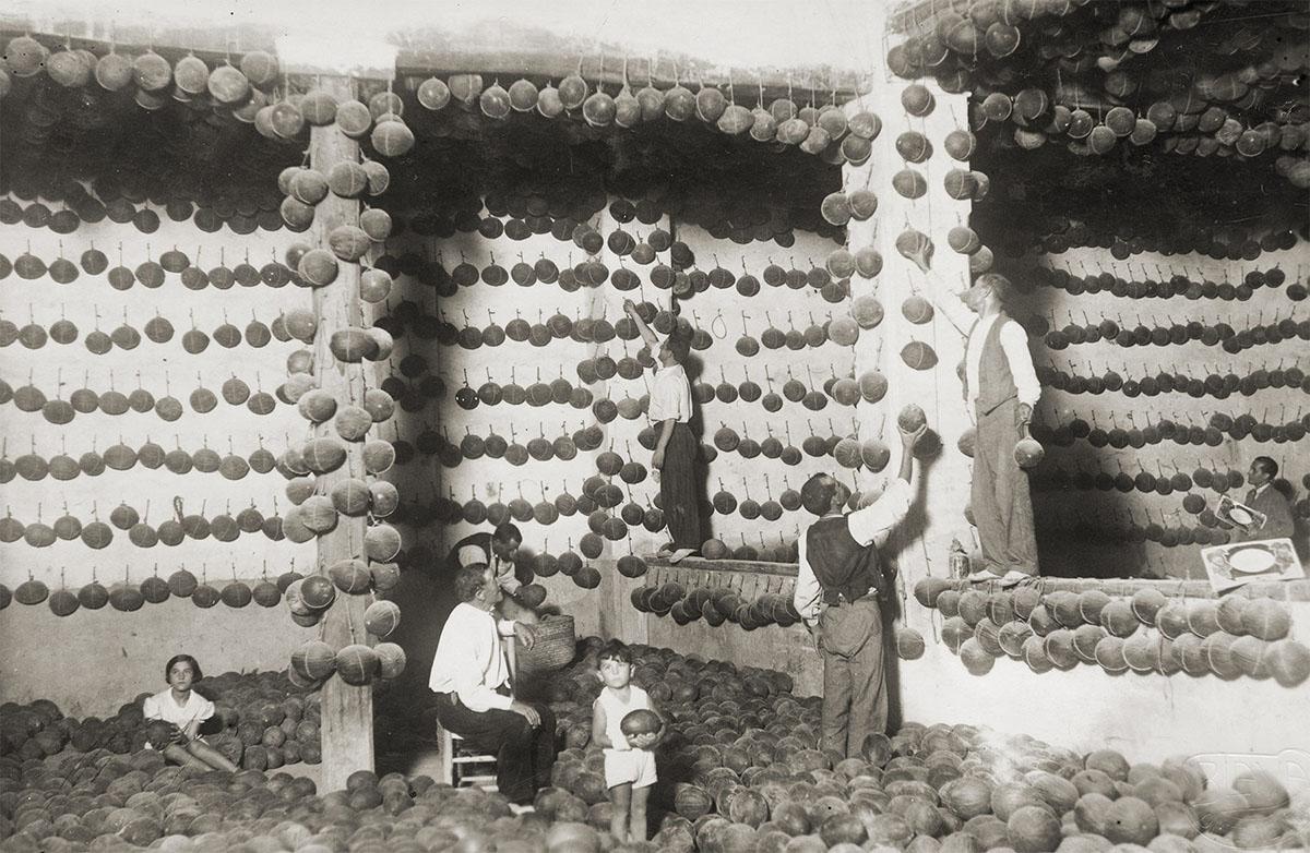 Melón de Ontinyent 'Diamante': la familia Vidal en una foto histórica. Foto cedida por José Vidal.