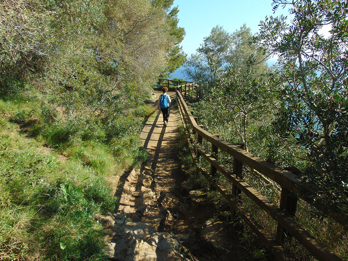 Camino de Ronda (Costa Brava): camino por la vegetación de Calella. Foto: Anna Otero