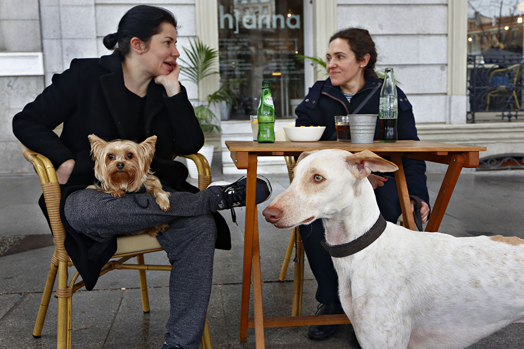 Un aperitivo con tu mascota en Madrid. Foto: Roberto Ranero