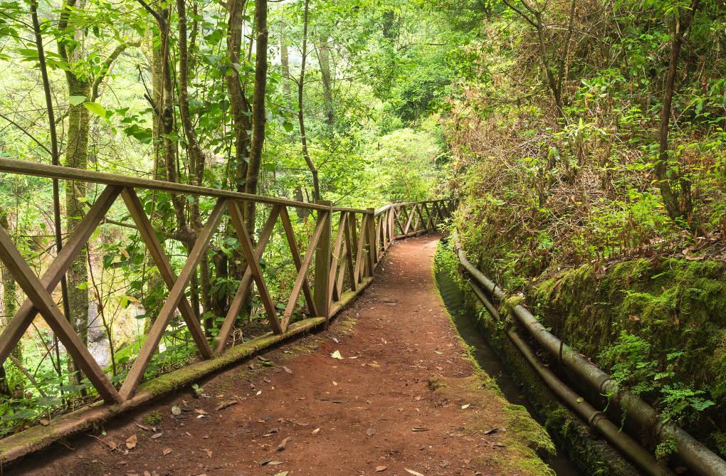 Paseo por el Bosque de tilos