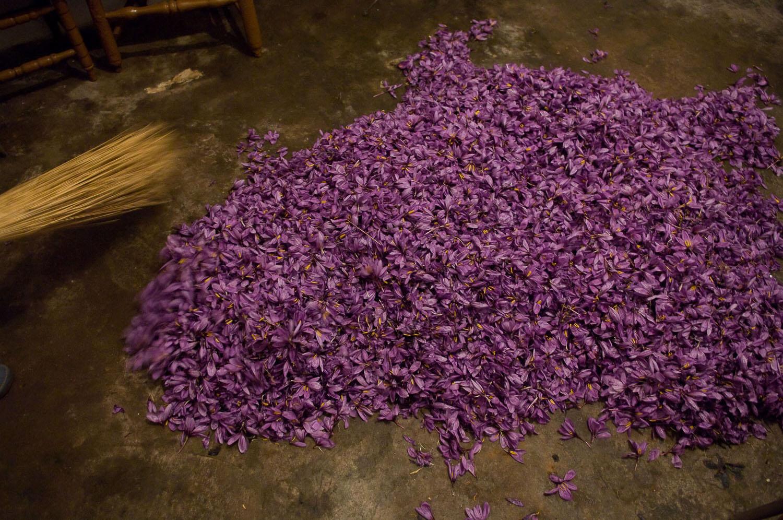 Alfombras de flores de azafrán