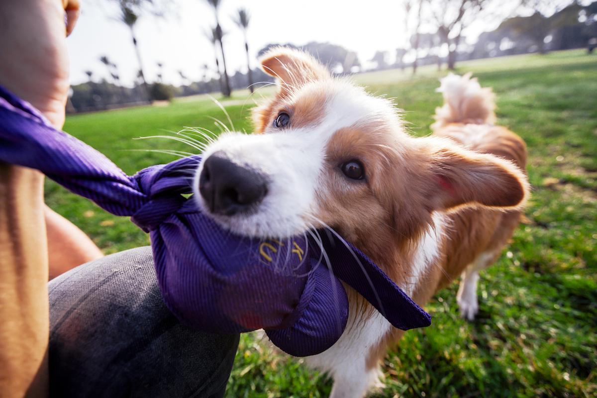 Pasando tiempo de calidad con tu perro. Foto: Shutterstock