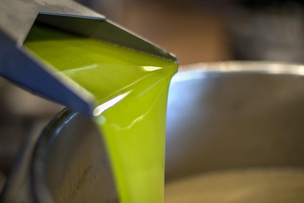 Aceite extraído de la molturación. Foto: Alfredo Cáliz