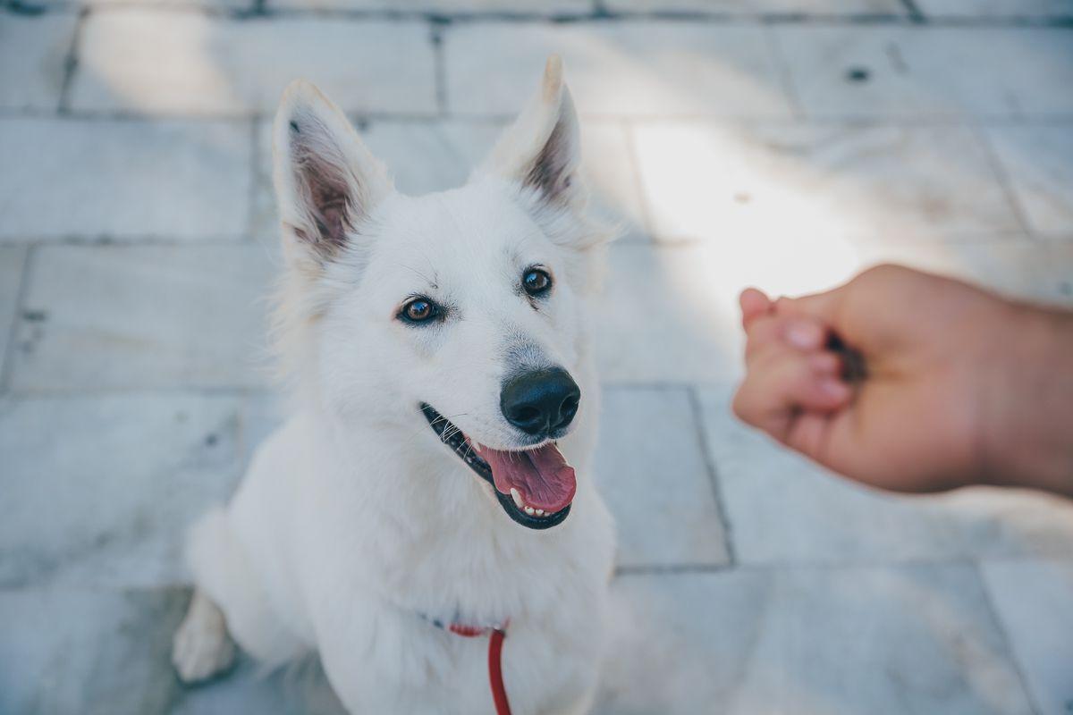 Uno de los perros participantes en la ruta Obediencia Urbana. Foto: Javier Sierra