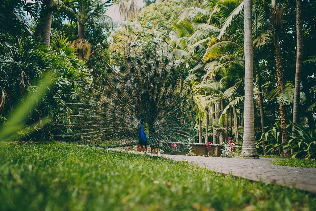 Hacienda El Buen Suceso (Gran Canaria) Jardín de la Marquesa. Foto: Roberto Ranero