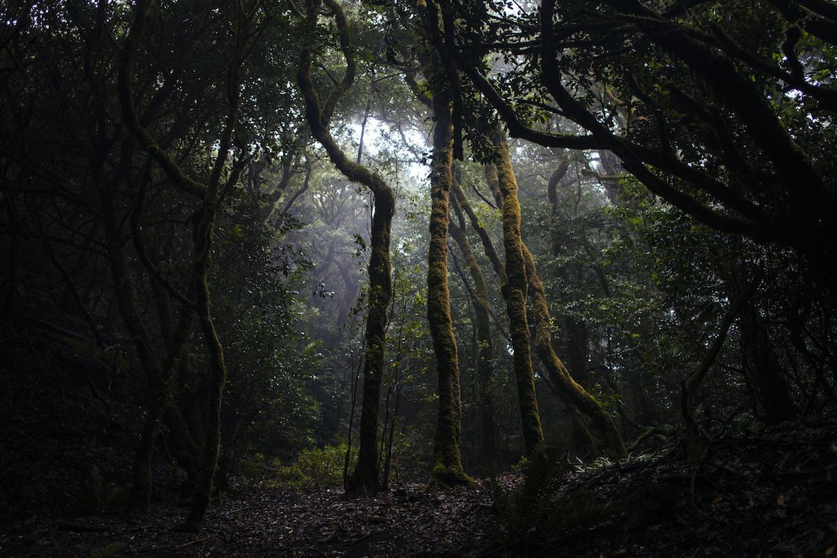 Laurisilva por el parque rural de Anaga. Foto: Rocío Eslava