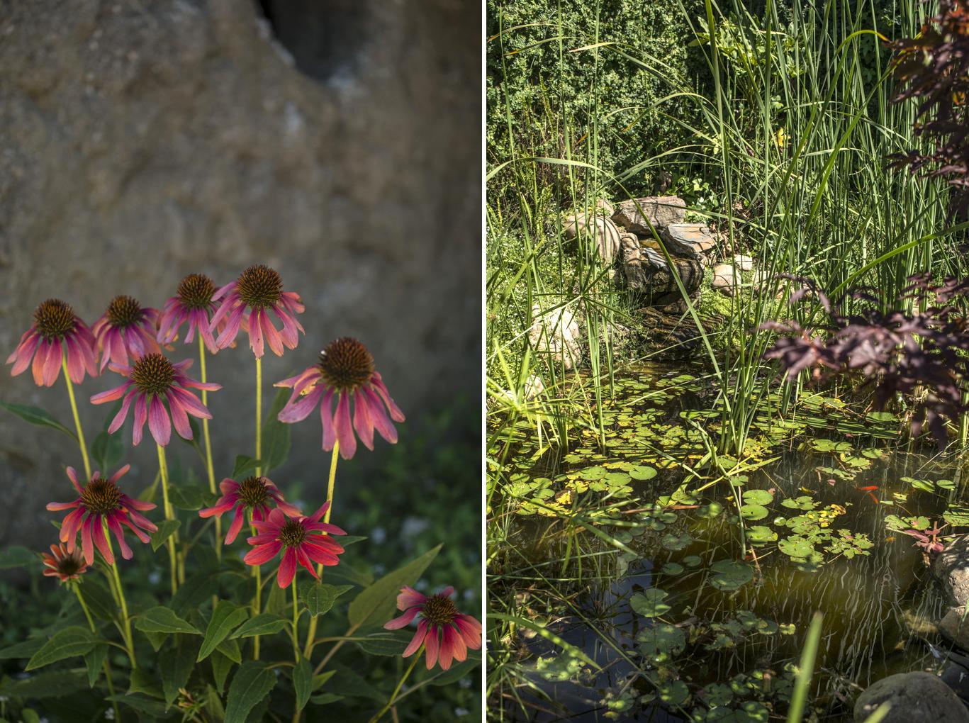 El estanque, con plantas acuáticas y flores de colores