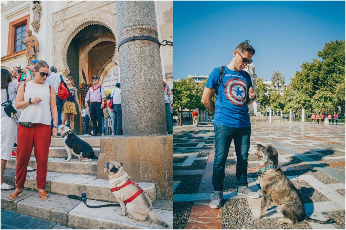 Los perros de Obediencia Urbana en las calles de Sevilla. Foto: Javier Sierra