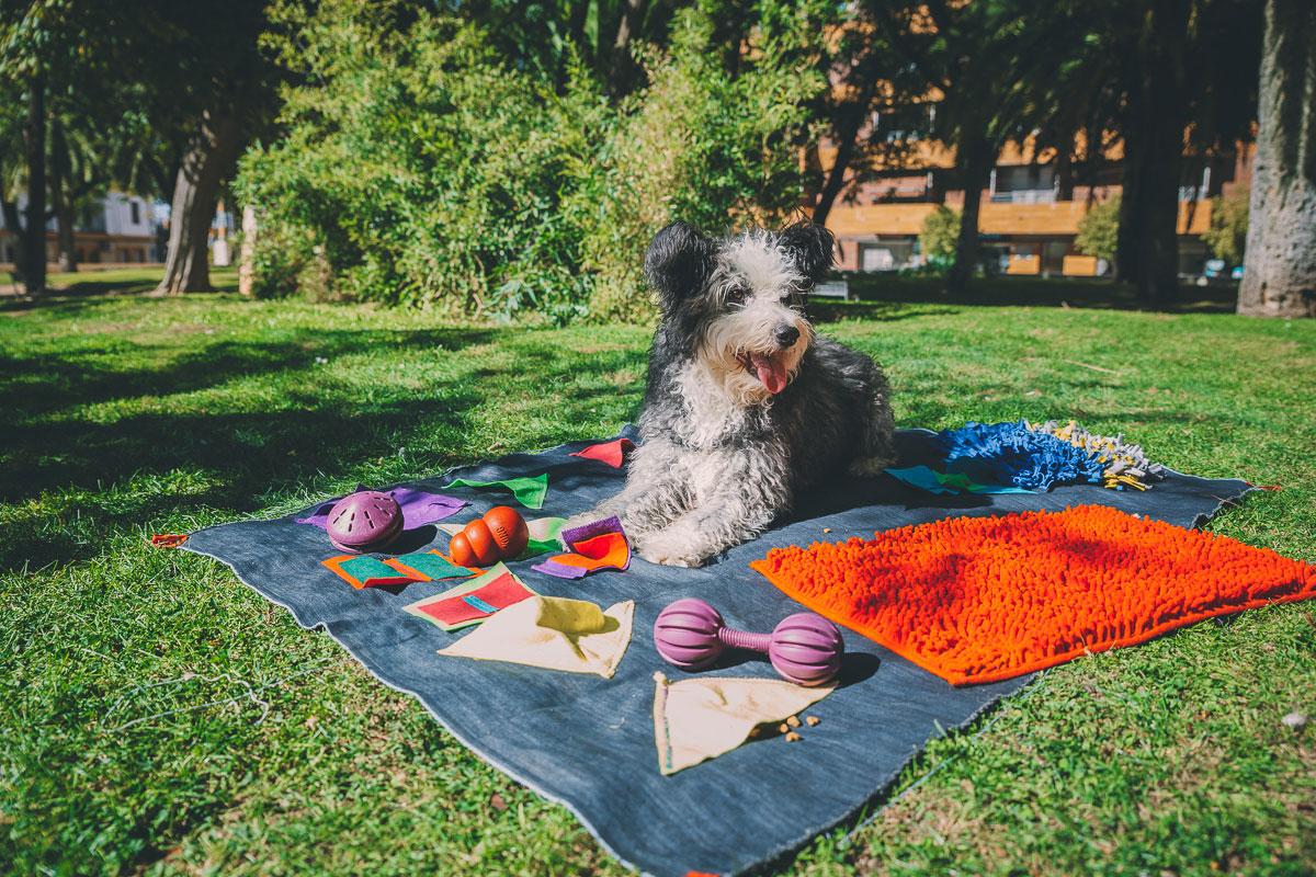 Juguetes interactivos para perros