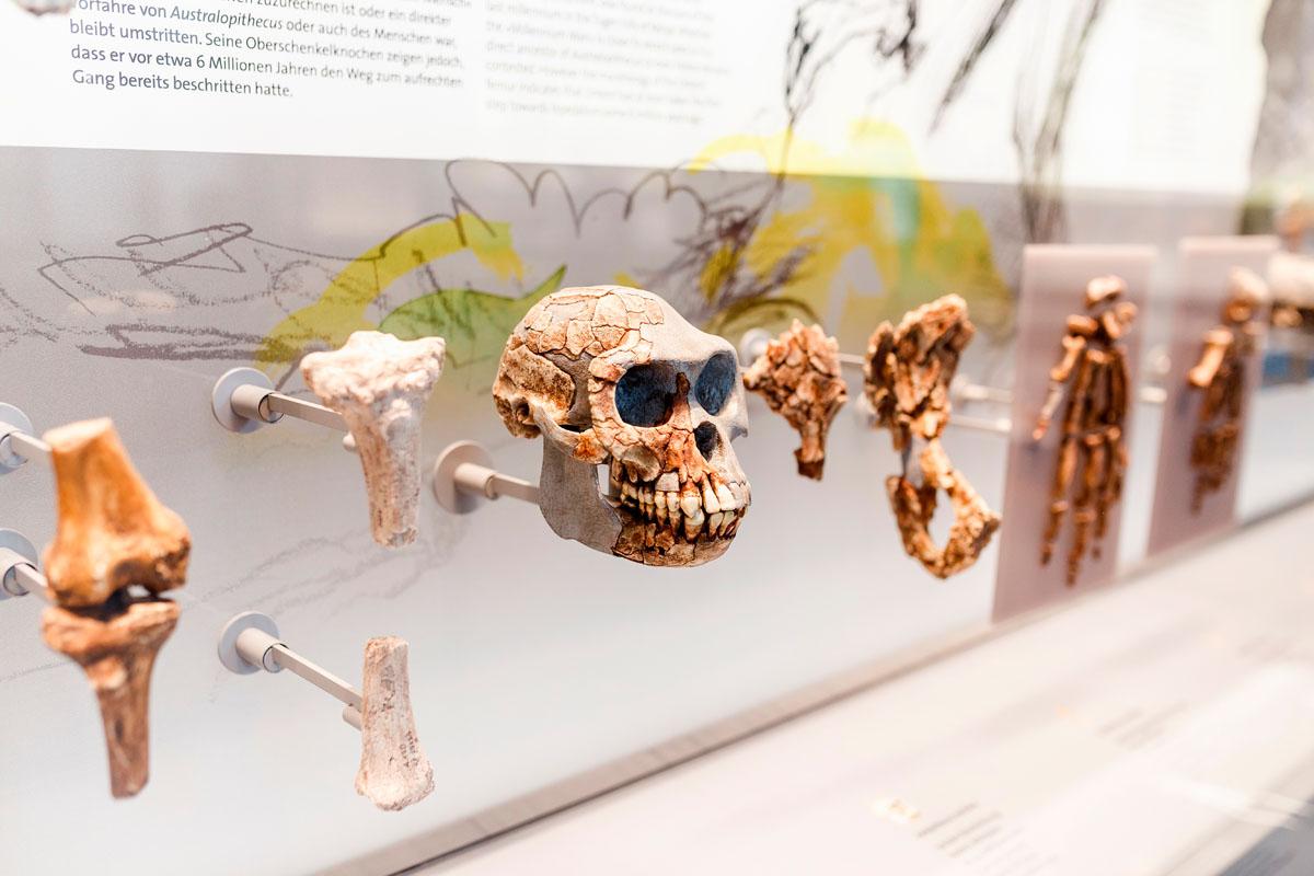 Museo de la evolución. Burgos