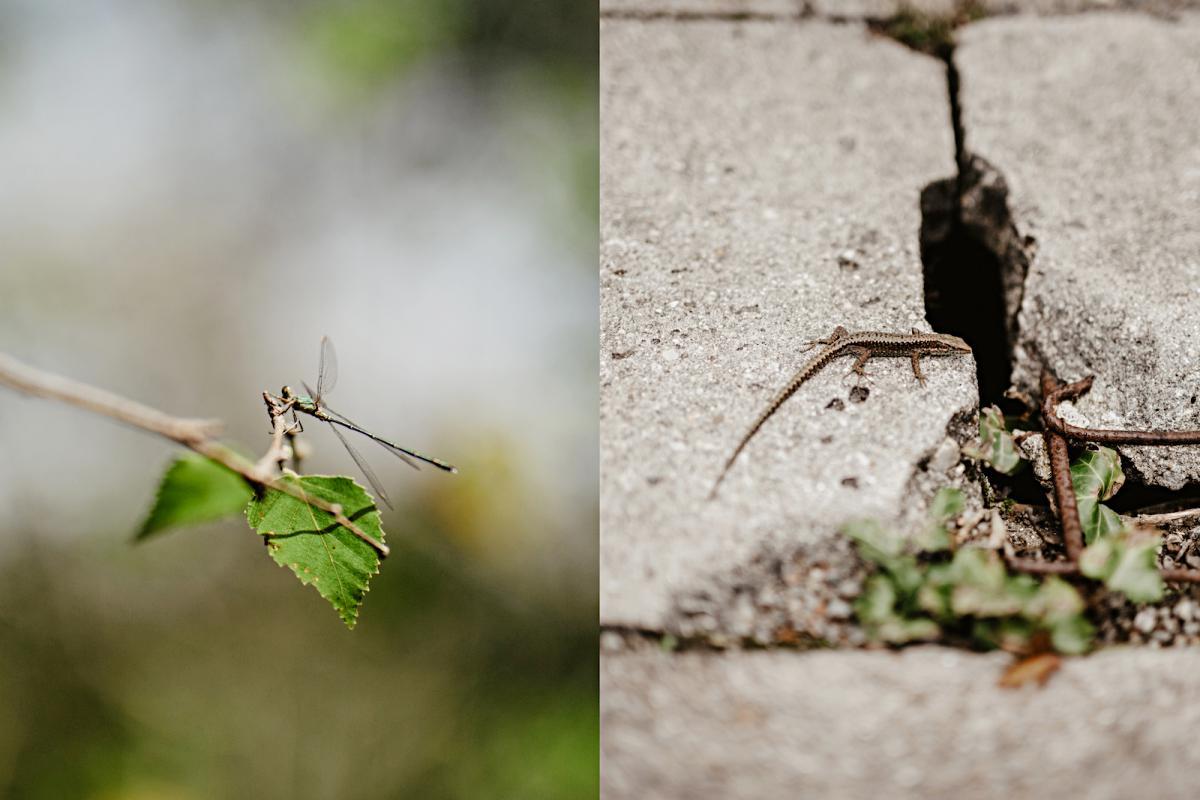 Fauna Fragas do Eume