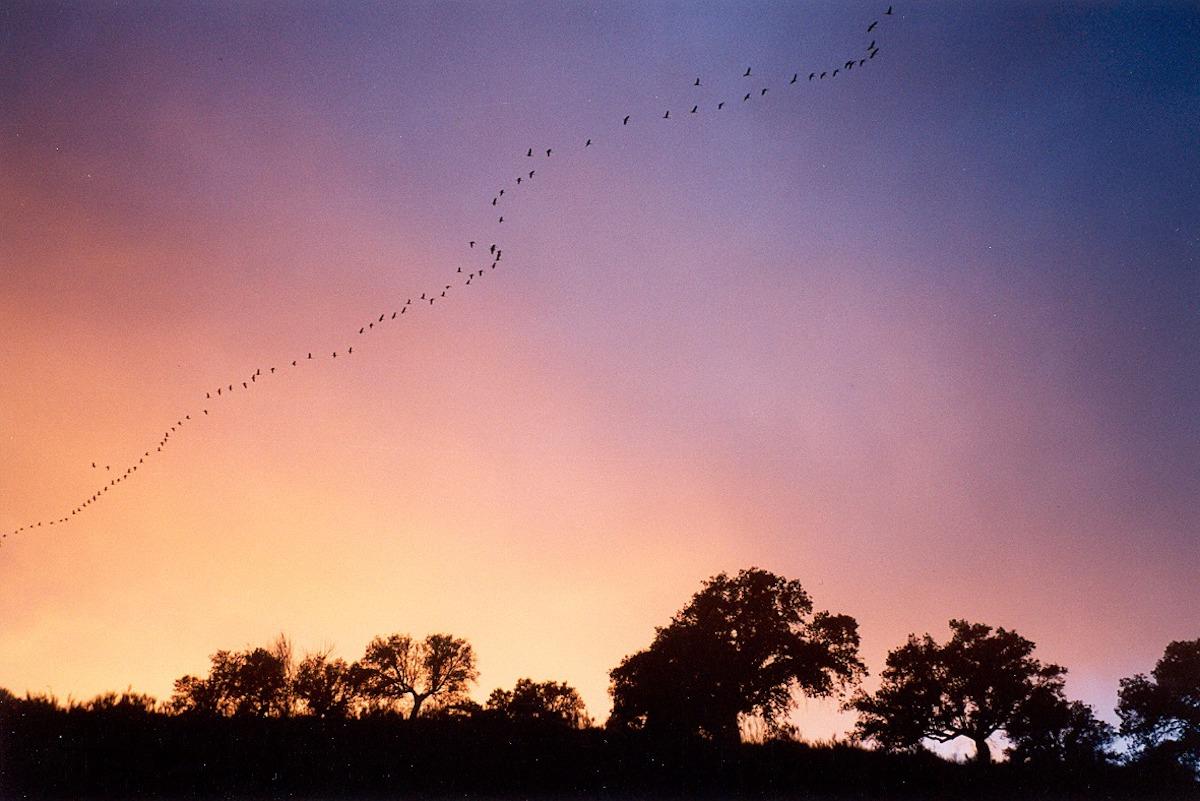 Cielos despejados en la comarca de Los Pedroches. Foto: Facebook