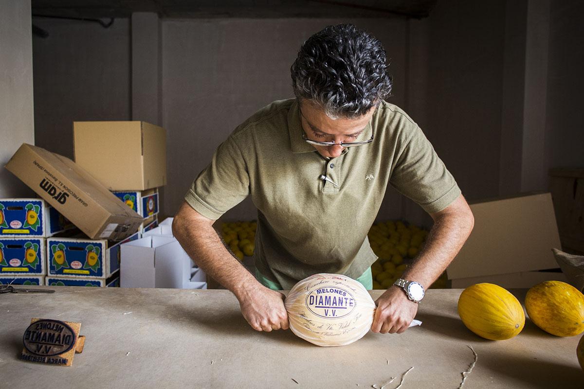 Melón de Ontinyent 'Diamante': José envolviendo uno de los melones. Foto: Eva Mañez