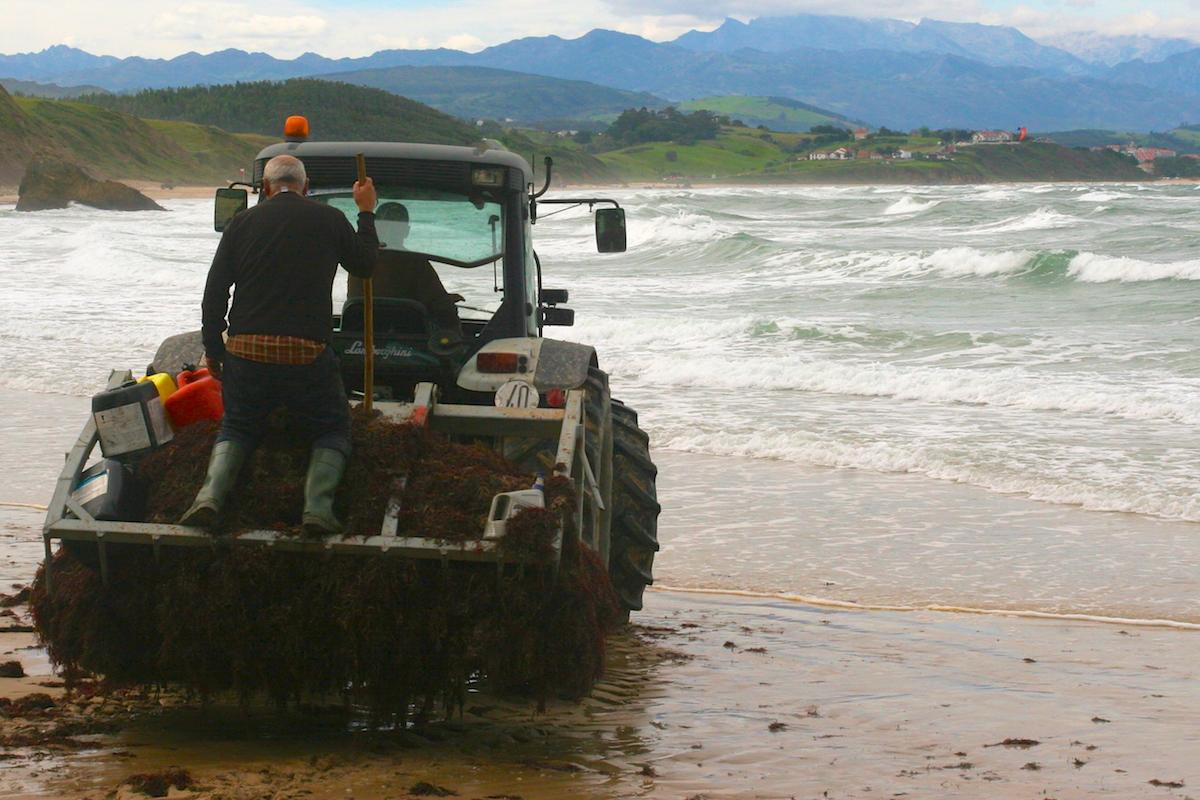 Las mareas y las marejadas durante la recolección. Foto: Guillermo Calvo