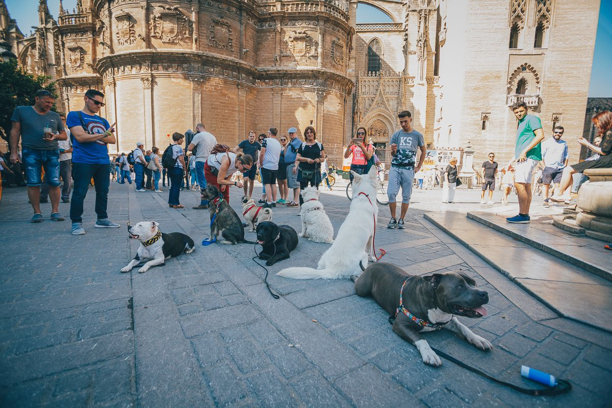 El grupo de canes y amos de Obediencia Urbana, junto a La Giralda. Foto: Javier Sierra