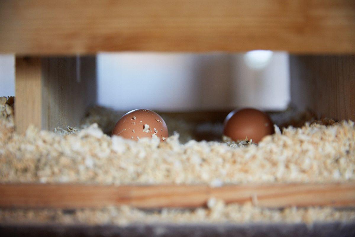 Huevos del Calaf. Foto: Yoana Salvador