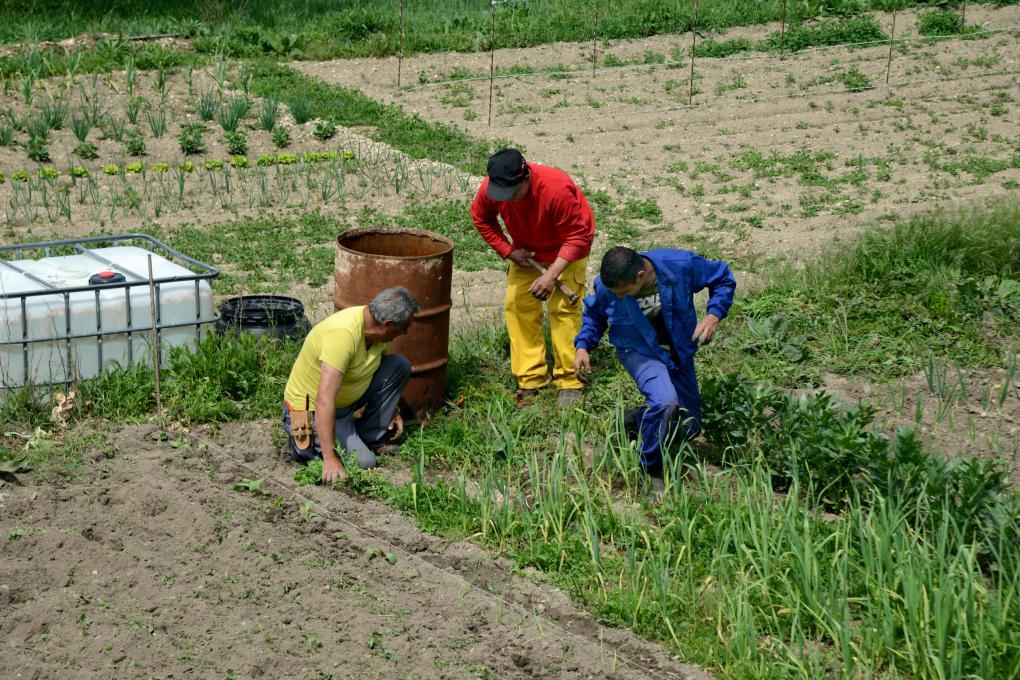 Agricultores en el Valle de Sedano.