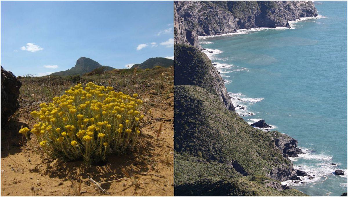 Flora y acantilados del parque regional de Calblanque. Foto: Facebook