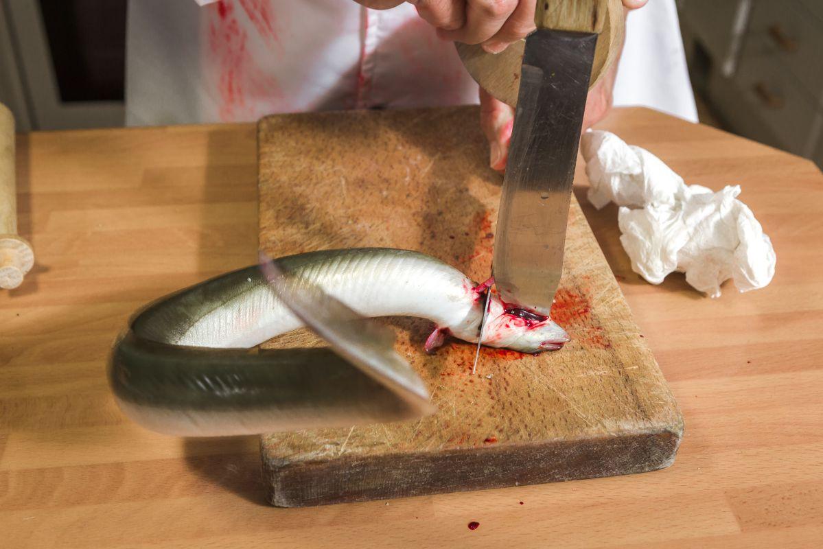 Sacrificando la anguila. Foto: David de Luis