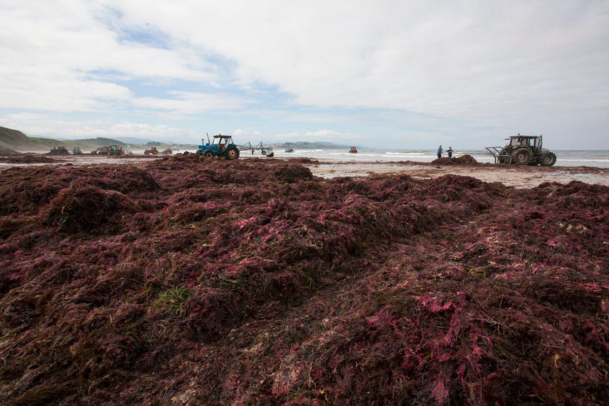 Las algas amontonadas en la costa. Foto: José García