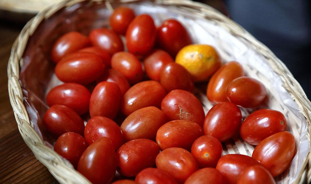 Viña Zanata (Tenerife): tomates. Foto: Roberto Ranero