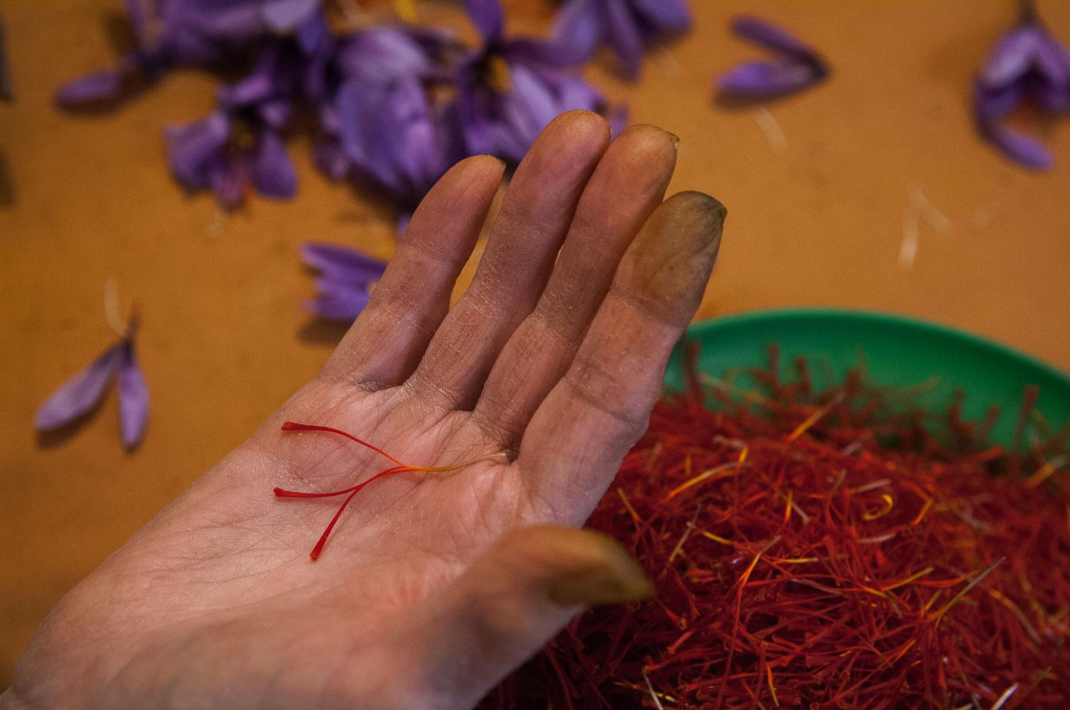 Monda de la flor del azafrán